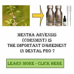 Mentha Arvensis (Cornmint)