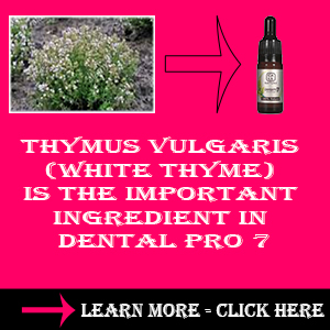Thymus Vulgaris (White Thyme)